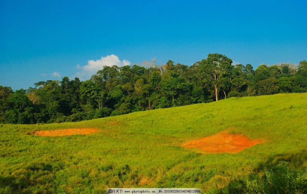 森林草地 森林 草地 树木 树林 植物 植被 生物 风景 美丽 蓝天 自然