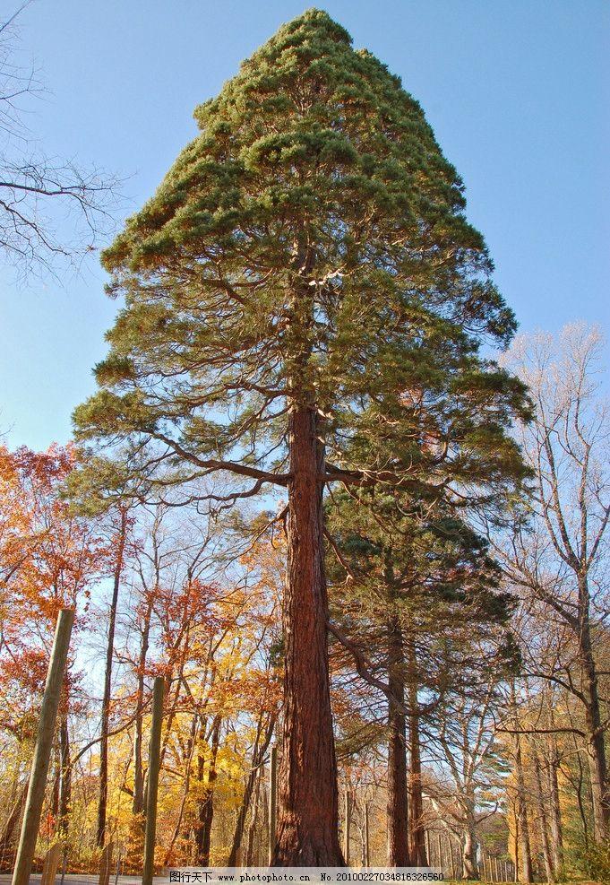 大树图片_自然风景_自然景观_图行天下图库