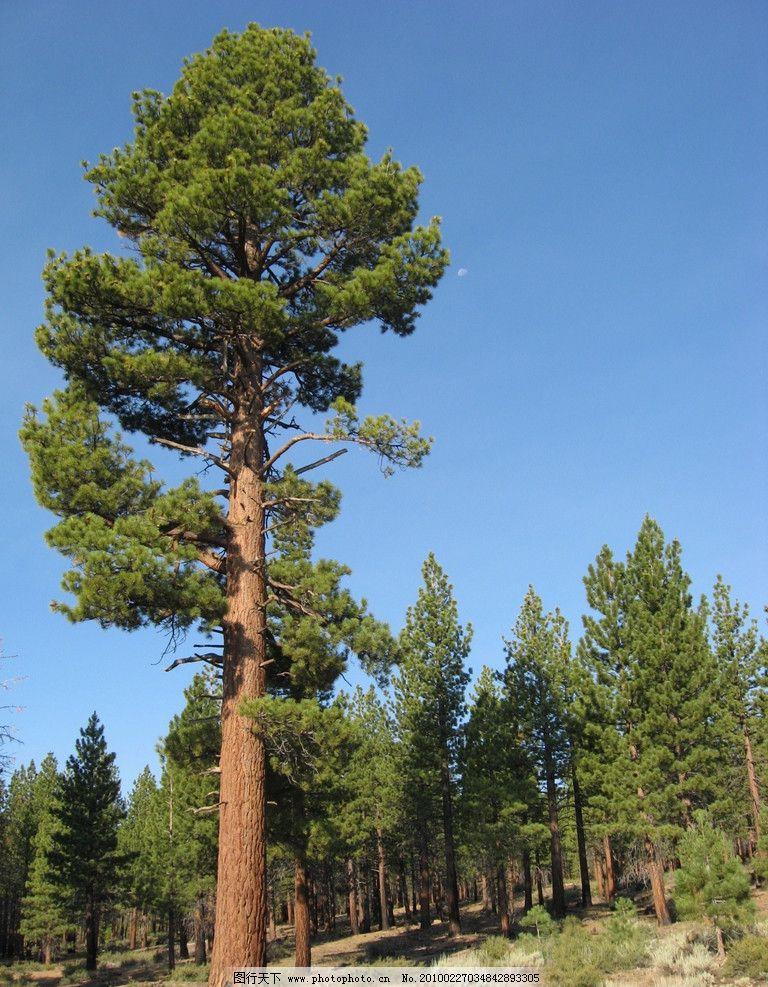 高清大树风景竖屏