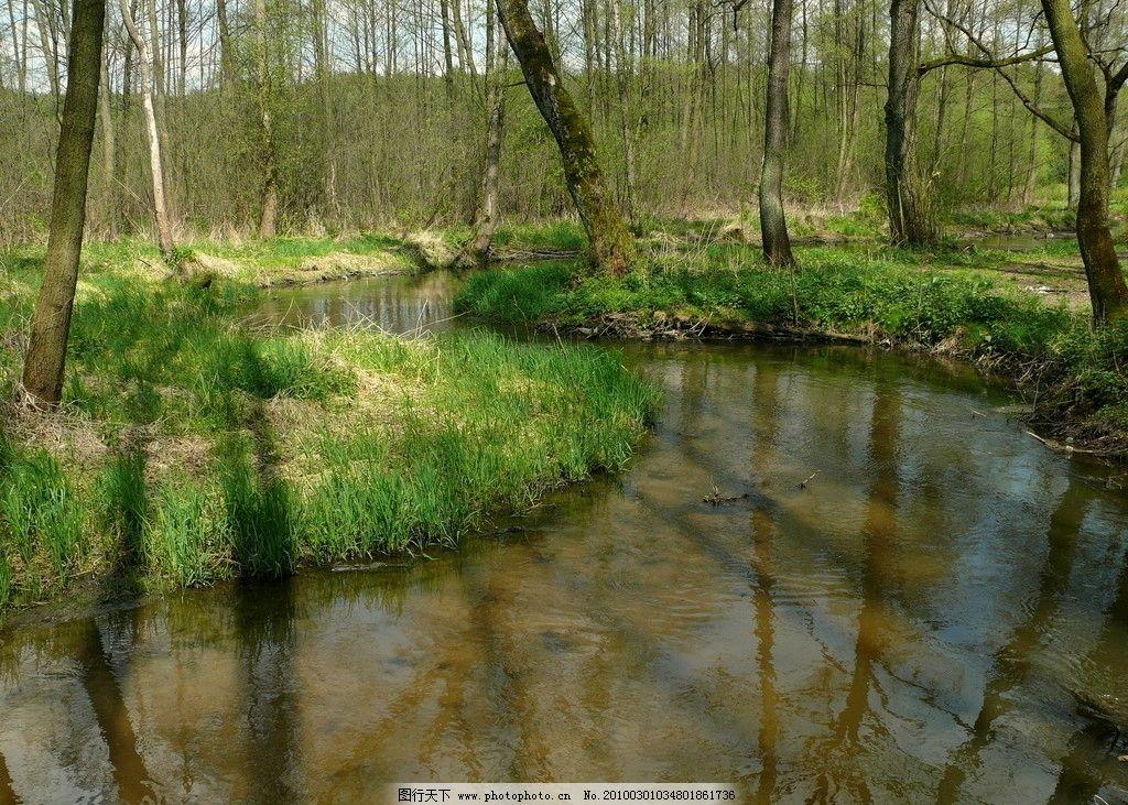 森林河流 森林 河流 树 树木 树林 植物 植被 生物 风景 美丽 壮观