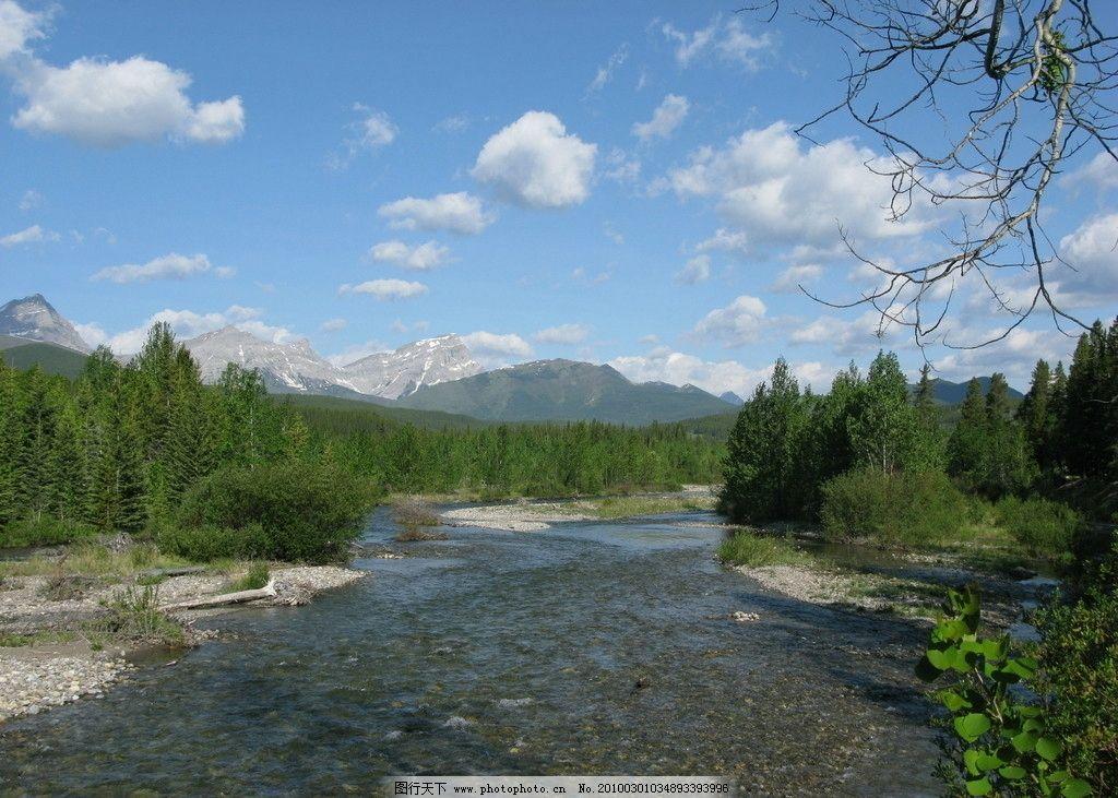 森林河流 森林 河流 高山 树 树木 树林 植物 植被 生物 风景 美丽