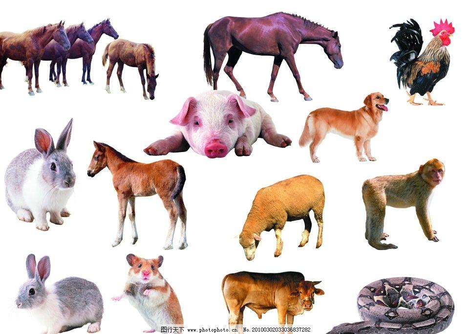 生肖动物图片