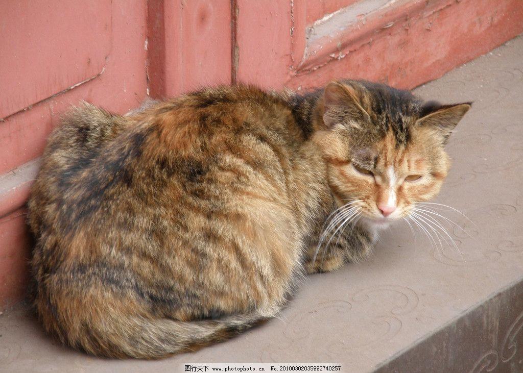 小猫 猫 睡觉 闲气 乐山大佛 旅游 四川 动物 摄影 家禽家畜 生物世界