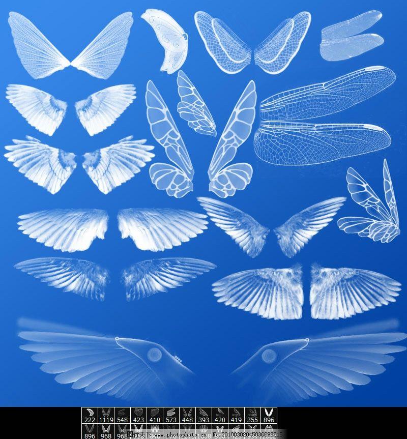 各种翅膀笔刷画笔 翅膀 蝴蝶翅膀 蜻蜓翅膀 天使翅膀 羽毛 天使 笔刷