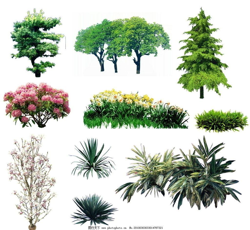 植物素材 植物 园林 环境 绿化 剑麻 素材 花草 树木 灌木 松树 梅 杜