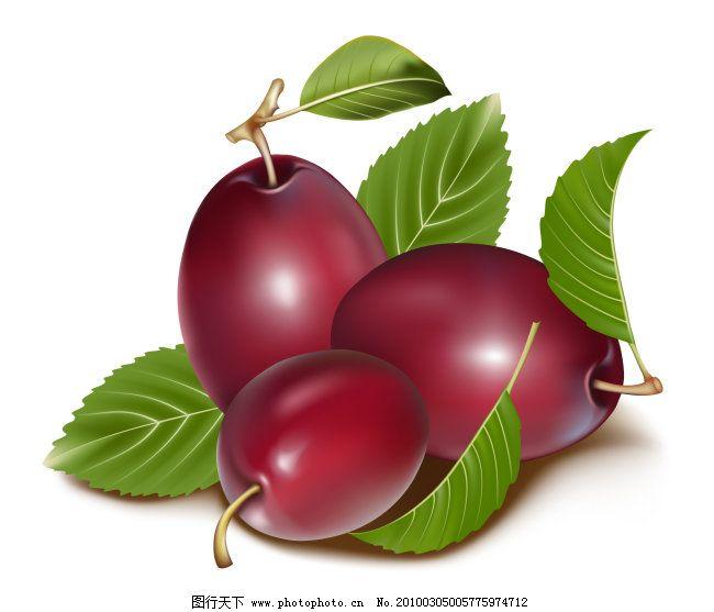 矢量水果 矢量水果免费下载 红枣 李子 叶子 枣子 矢量图 日常生活