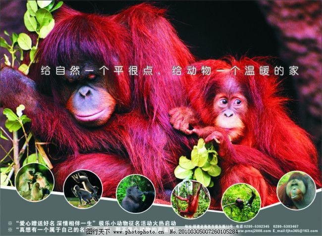 动物园矢量 彩页 猴子 给自然一个平衡点 给动物一个温暖的家 海报