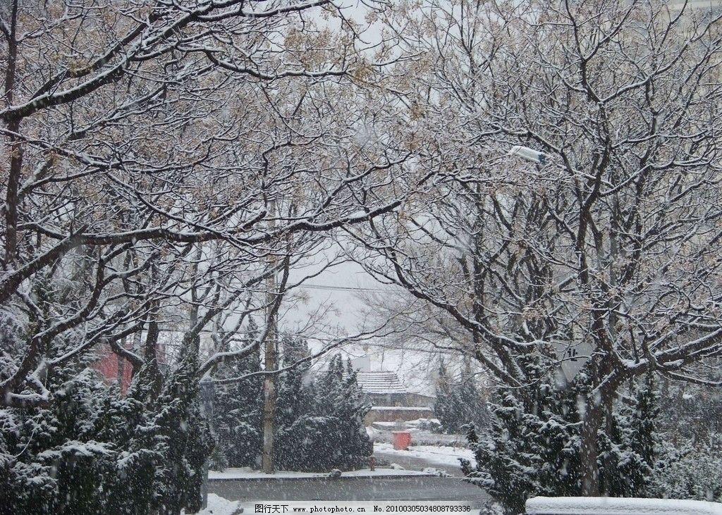 雪景 雪中玉枝 树枝 冬天 风景 下雪 美景 摄影 风景摄影 自然风景