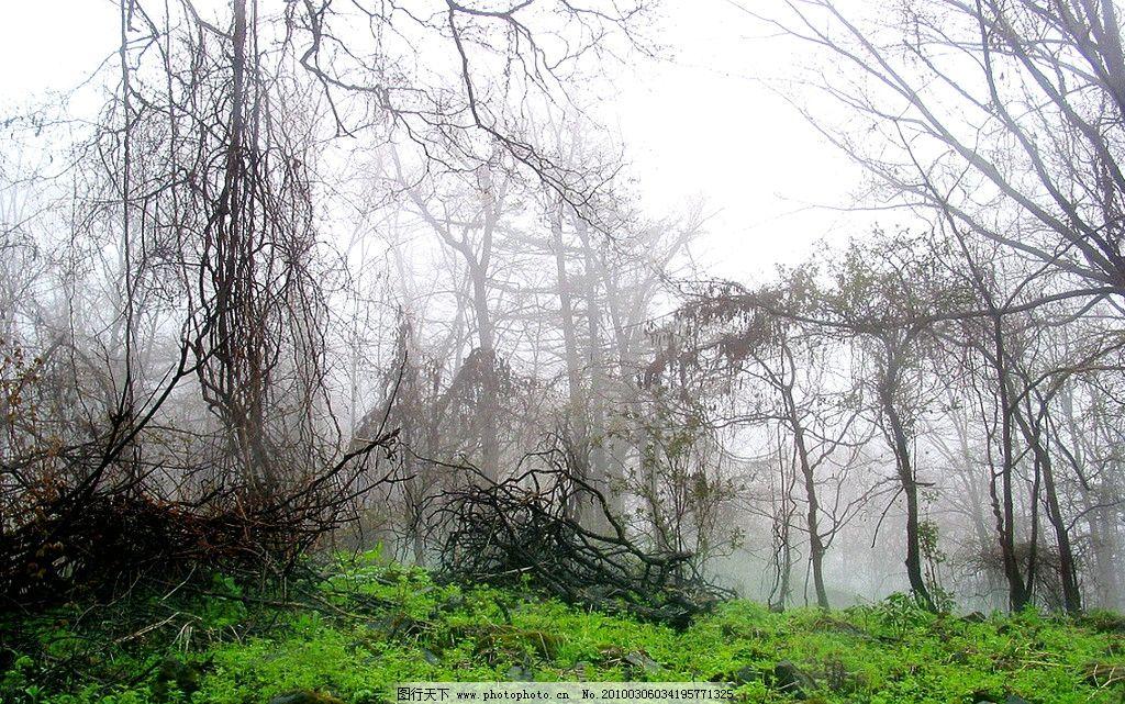 江源干饭盆景区 江源 干饭盆景区 风景 旅游 树木 绿地 自然风景 旅游