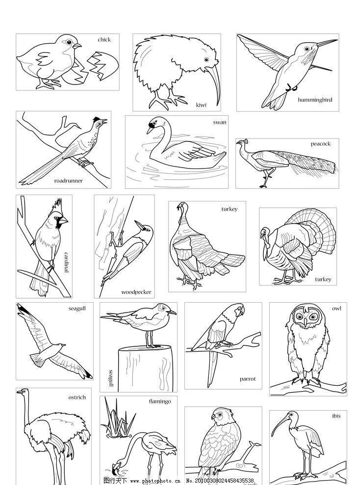 野生动物线描图图片