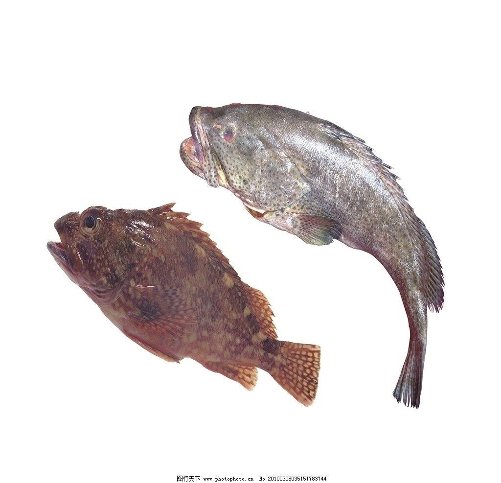 石斑鱼 大石斑鱼 大鱼 红鱼 鱼 黑石斑鱼 红石斑鱼 深海石斑 海洋生物