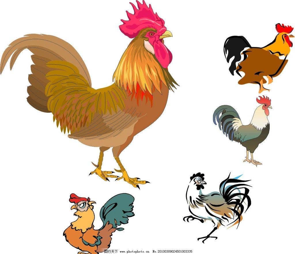 公鸡 矢量 家禽家畜 生物世界 cdr