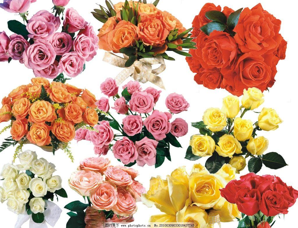 玫瑰花 粉玫瑰 红玫瑰 白玫瑰 黄玫瑰 玫瑰花心 玫瑰花束 各种玫瑰