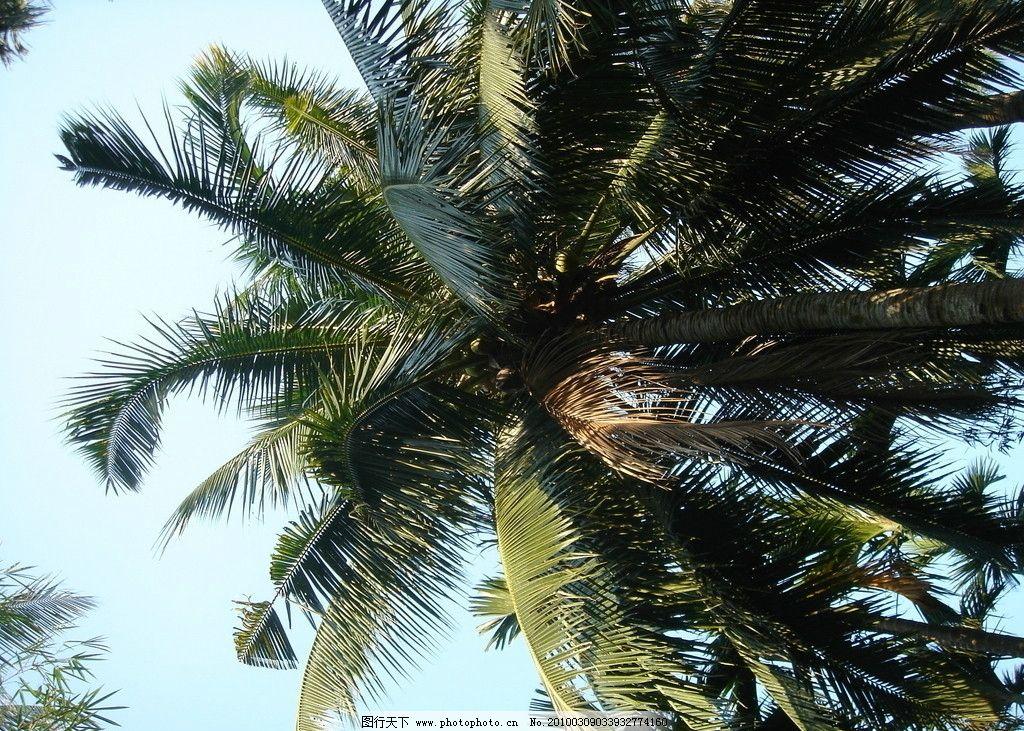 椰树 海南岛 摄影风景 海南风景 国内旅游 旅游摄影 摄影 72dpi jpg