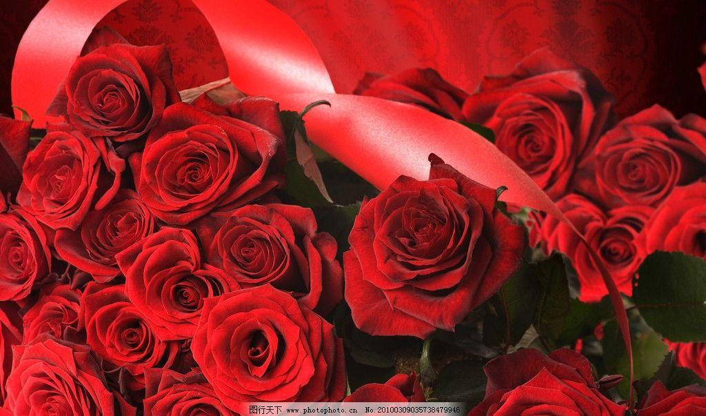 一簇玫瑰 玫瑰花 彩带 绿叶 红色 摄影