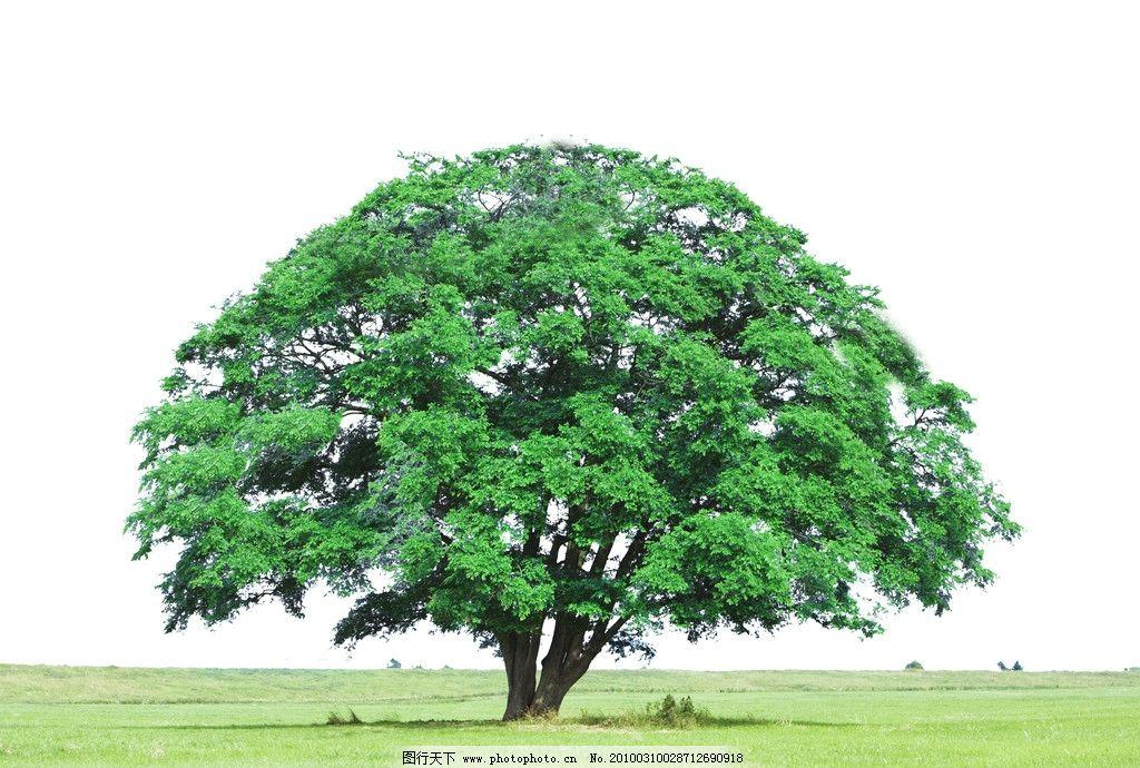 大树干彩色简笔画