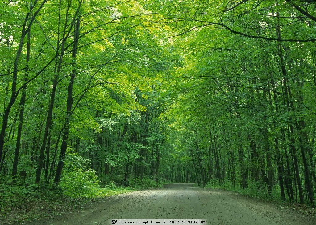 绿树林 绿 树 森林 小路 绿树 自然 风景 原始 生态 环境 风景素材 自