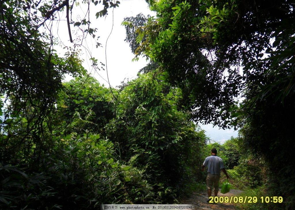 罗浮山路边 古树 石阶 绿叶 小道 罗浮山风景 旅游摄影 摄影