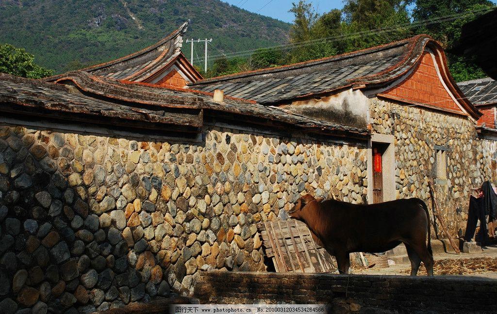 牛 农村 老房子 摄影图库 自然景观 田园风光 农村风光 古建筑 摄影