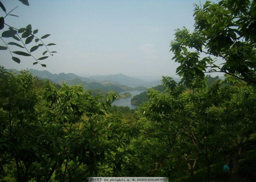 大别山风景 大别山 水库 山峦 板栗树 自然风景 旅游摄影 摄影 314dpi