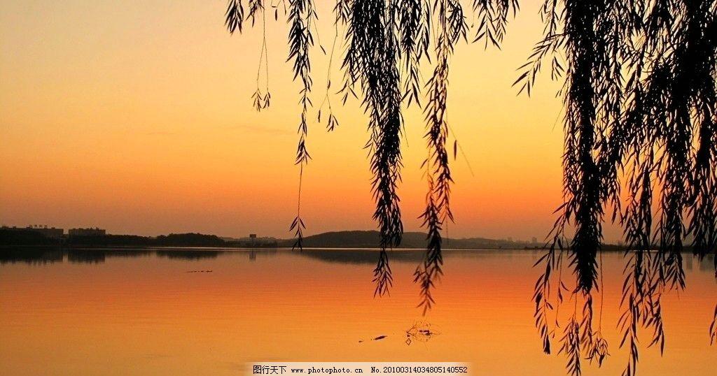 夕阳余晖 湖畔 柳树 柳条 自然风景 自然景观 摄影