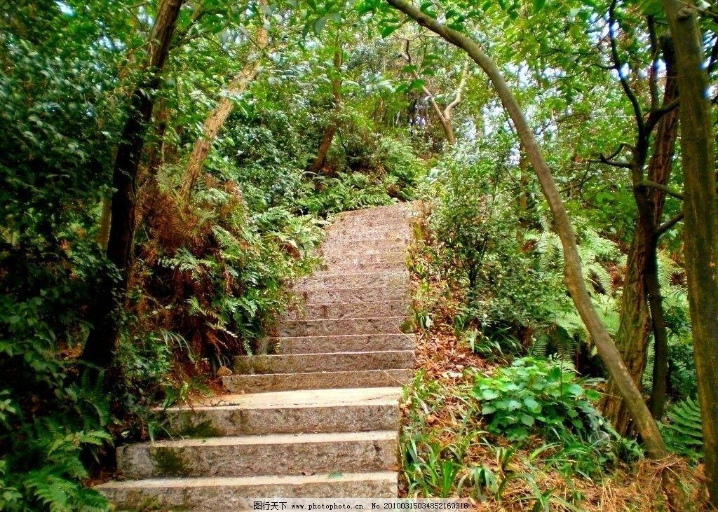 林中阶梯 林荫 台阶 树丛 森林 自然风景 自然景观 摄影 96dpi jpg