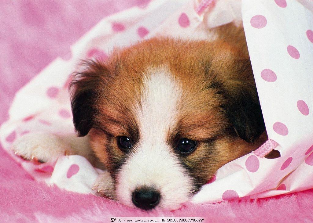 小狗 可爱 壁纸 野生动物 生物世界 摄影 72dpi jpg