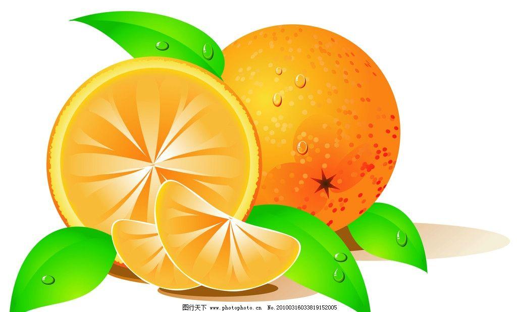 其他图片素材  香橙 柠檬 水果 橙子 香橙矢量图 高清水果图 可爱水果