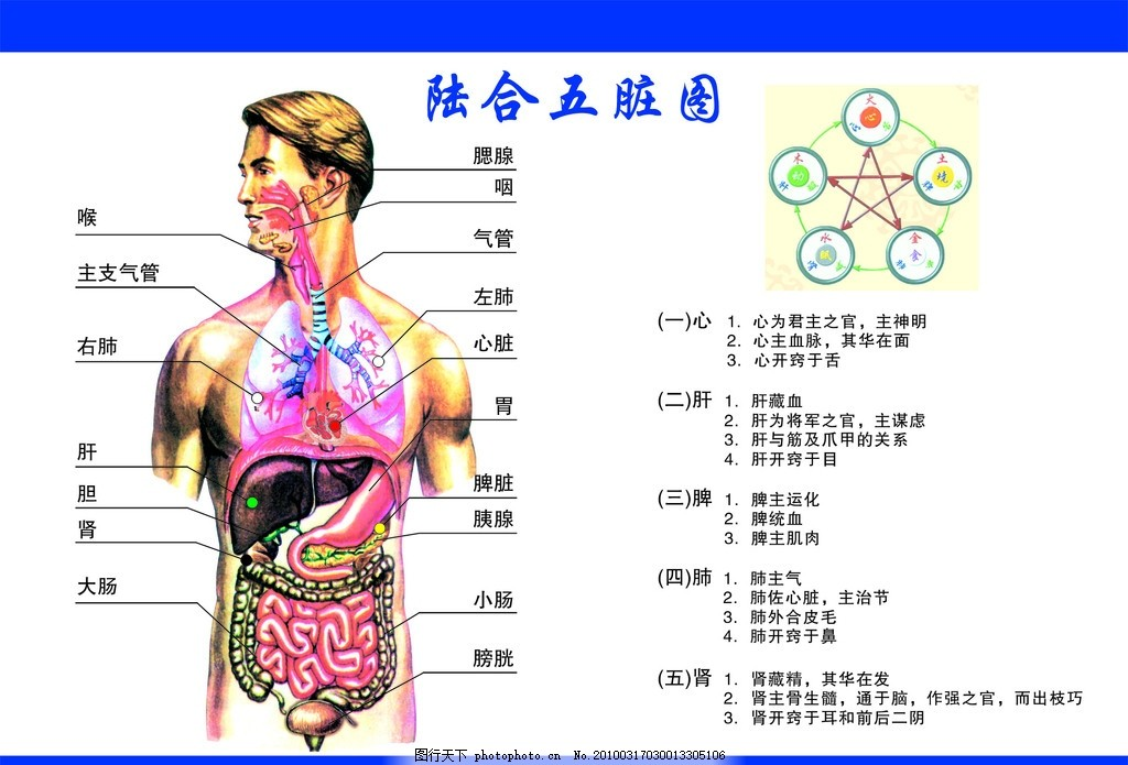 人体经络图 穴位 理疗 按摩 养生 广告设计模板 源文件