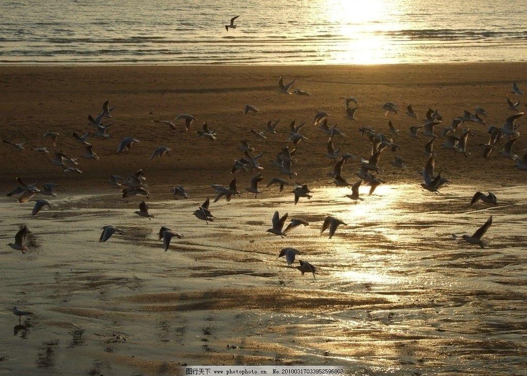 海鸥群舞 青岛 海边 群鸥 飞翔 青岛美景 国内旅游 旅游摄影