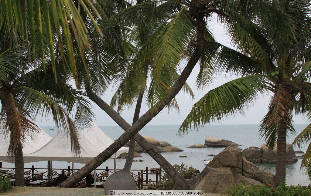风景树 海南 三亚 海边 交叉 国内旅游 旅游摄影