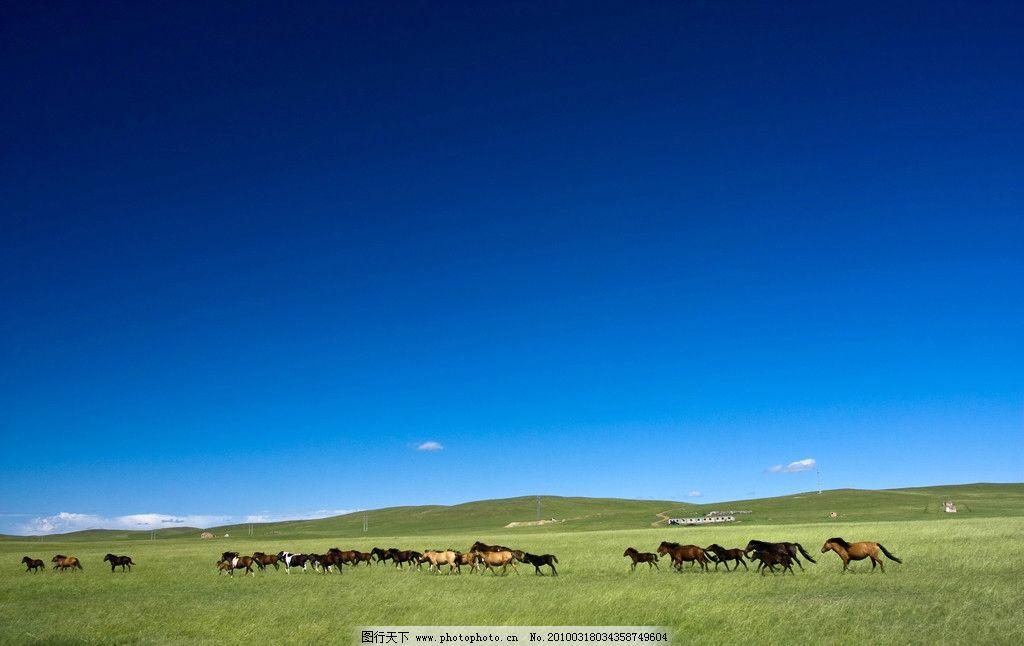 锡林格勒草原图片图片