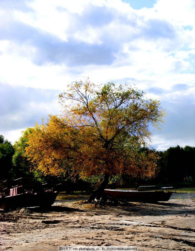金色树 船 沙滩 自然风景 旅游摄影