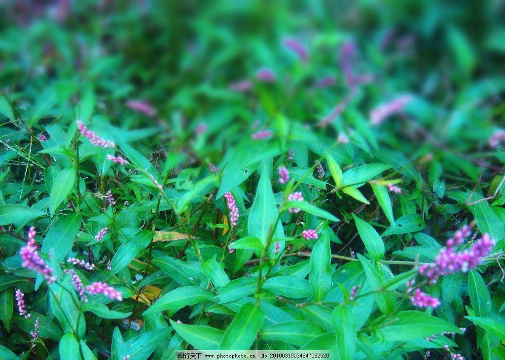 紫色小花 花团 花团锦簇 秋天的小花 绿草 秋色 自然 植物 自然风景