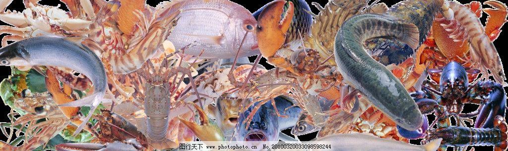 海鲜集合 各种鱼类 虾 龙虾 螃蟹 蛤蜊 海产品 生鲜食材 源文件