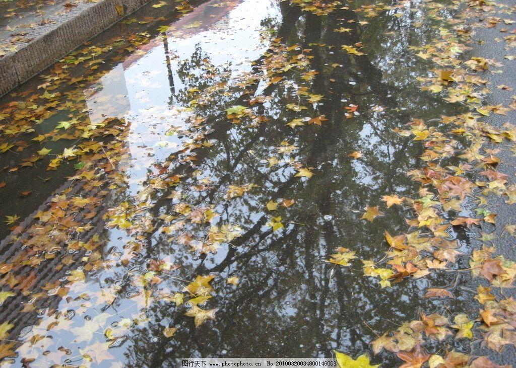 水中落叶 自然风景 自然景观 摄影