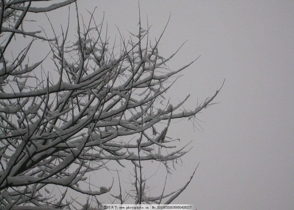 树挂 雪 阴天 北方的春天 枝头 树木树叶 生物世界 摄影 180dpi jpg