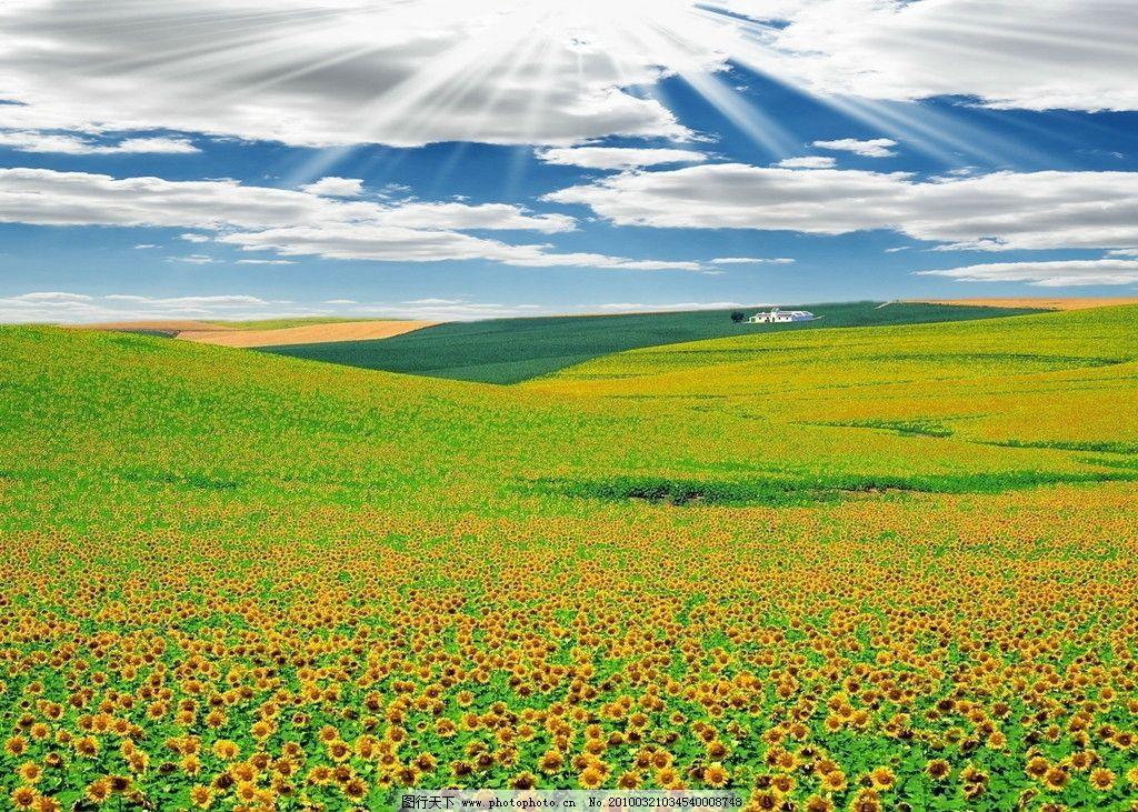 自然景观 田园风光  田园风光蓝天白云 绿色 农场 农作物 风景 田园