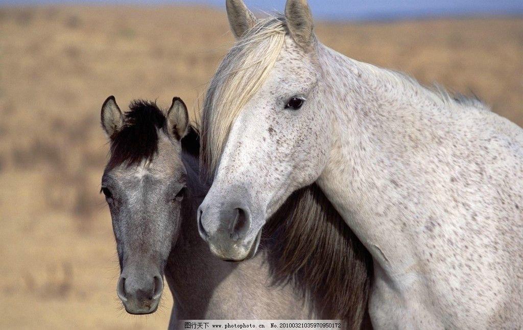 壁纸 动物 马 骑马 1024_646