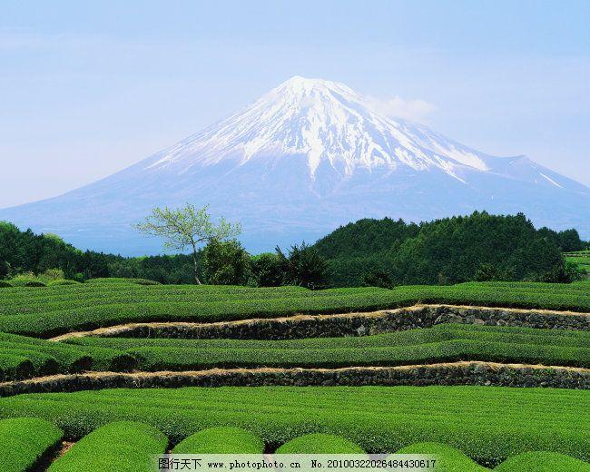 日本 田野 雪山 高清大图 旅游 风光 风景 富士山 雪山 茶园 田野