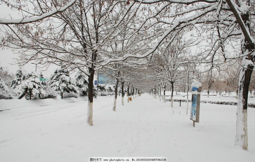 雪景 雪 树 路 自然风景 自然景观 摄影 300dpi jpg