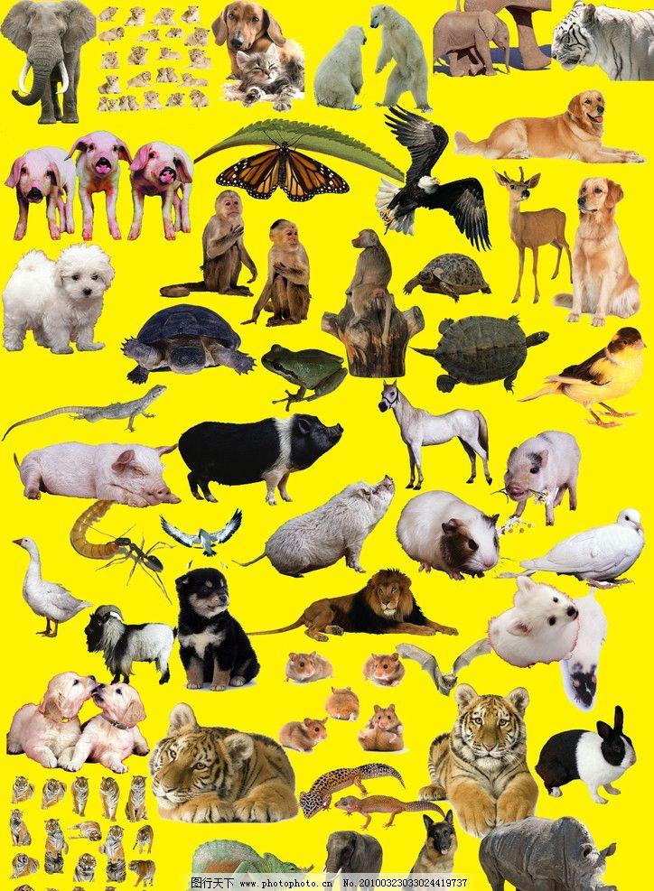 动物大全 野生动物 家禽 家禽动物 野生保护动物 小动物 野兽