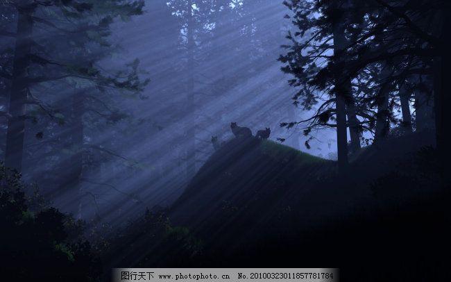 夜晚梦幻树林壁纸