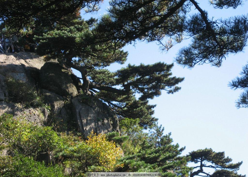 黄山风景 松树 石头 阳光 蓝天 白云 树木 山水风景 摄影
