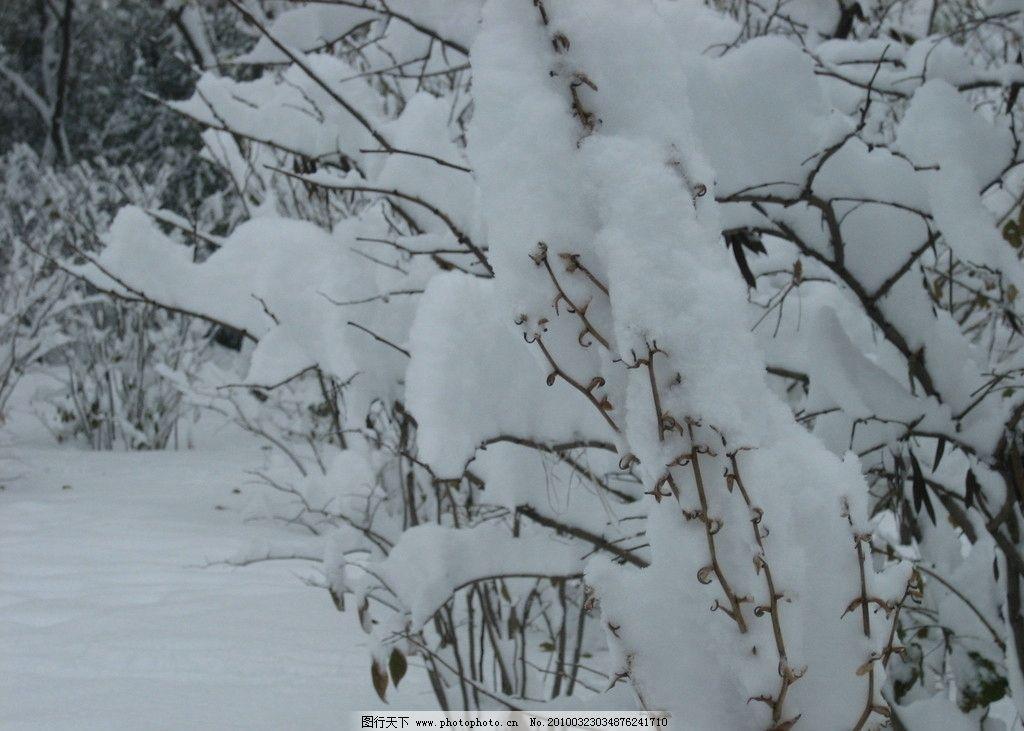 玉树 雪景 树枝 雪 树木 雪树 雪地 树 背景素材 广告背景 桌面背景