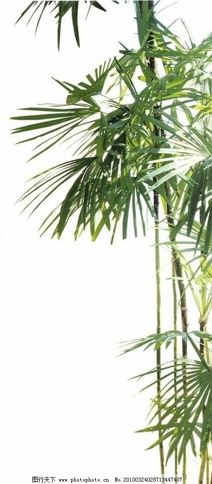 竹子 竹 psd 素材 园林素材 园林设计 分层竹子素材 后期贴图 ps分层