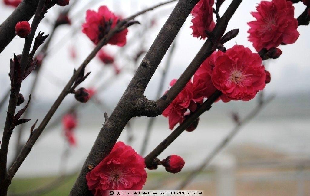 桃花 春天 风景 自然风景 自然景观 摄影