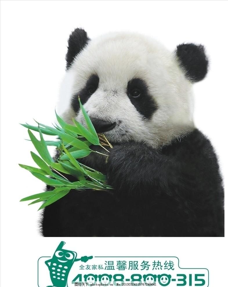 熊猫 电话矢量 温馨服务热线 野生动物 生物世界 矢量 cdr