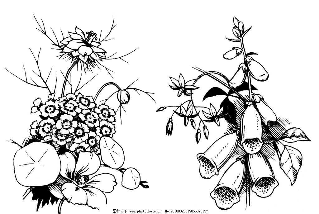 美麗花叢圖片,手繪 金鈴花 菊瓣花 綠絨蒿 花苞 樹枝