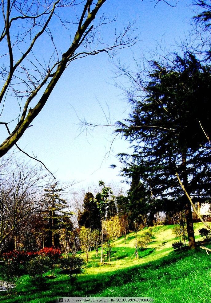 晨光倩影 牛首山 数目 晨光 倒影 草地 松树 红花 自然风景 自然景观